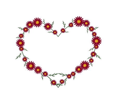 osteospermum: Love Concept, Illustration of Fresh Red Daisy Flowers Forming in Heart Shape Isolated on White Background. Stock Photo