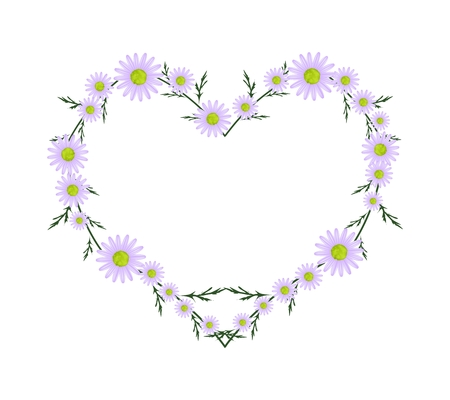 osteospermum: Love Concept, Illustration of Fresh Purple Daisy Flowers Forming in Heart Shape Isolated on White Background. Stock Photo