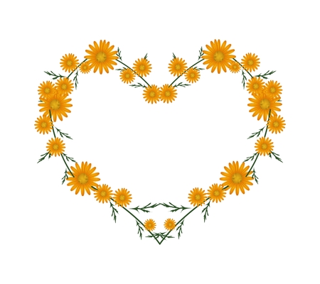 asteraceae: Love Concept, Illustration of Fresh Orange Daisy Flowers Forming in Heart Shape Isolated on White Background.