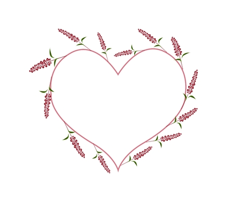 sage: Love Concept, Illustration of Scarlet Sage Flowers or Salvia Flowers Forming in Heart Shape Isolated on White Background. Illustration