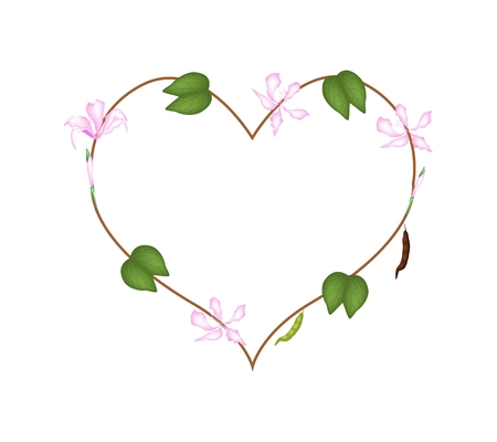 purpurea: Love Concept, Illustration of Pink Bauhinia Purpurea Flowers Forming in Heart Shape Isolated on White Background.