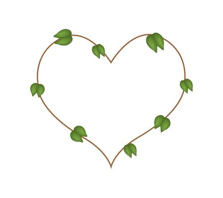 purpurea: Love Concept, Illustration of Green Bauhinia Purpurea Leaves in A Heart Shape Isolated on White Background. Illustration