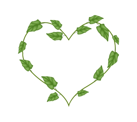 vine leaves: Love Concept, Illustration of A Heart Shape Wreath Made of Fresh Green Vine Leaves Isolated on A White Background.