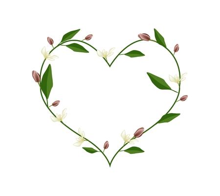silhouette fleur: Amour, Illustration de Magnolia Wine Flowers ou Magnolia Figo Fleurs Formant en forme de coeur isolé sur fond blanc.