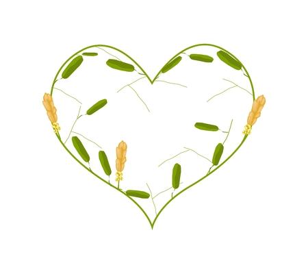 fistula: Love Concept, Illustration of Ringworm Bush Flowers or Senna Alata Flowers Forming in Heart Shape Isolated on White Background. Illustration