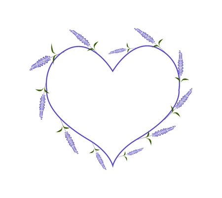 salvia: Love Concept, Illustration of Purple Sage Flowers or Salvia Flowers Forming in Heart Shape Isolated on White Background.