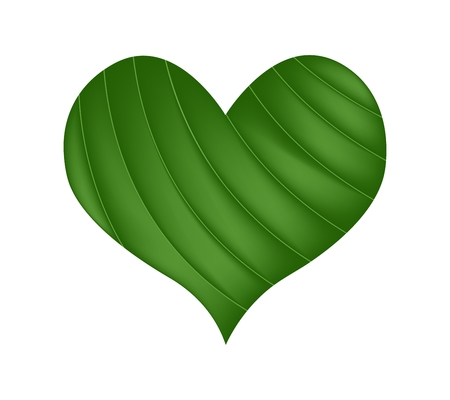 banana leaf: Love Concept, Illustration of Fresh Banana Leaf Forming in A Beautiful Heart Shape Isolated on White Background.