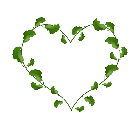 Love Concept, Illustration of Heart Shape Wreath Made of Evergreen Leaves Isolated on A White Background.