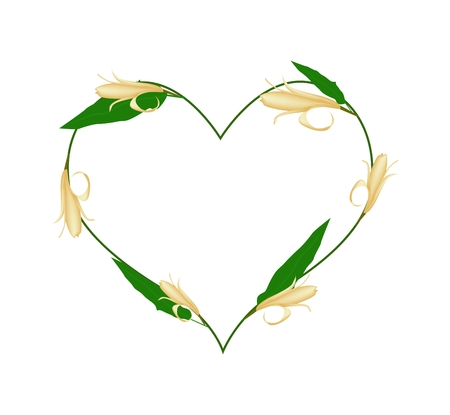 Love Concept, Illustration of Yellow Michelia Alba Flowers or Michelia Champaca Flowers Forming in A Heart Shape Isolated on White Background.