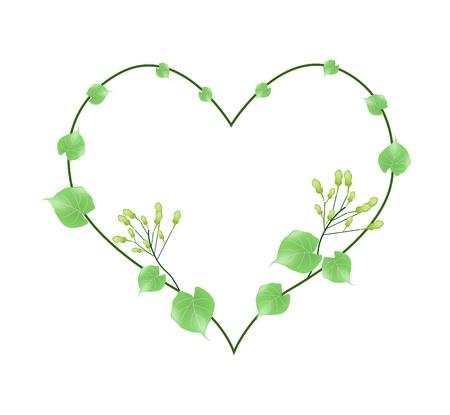 umbel: Love Concept, Illustration of Hoya Carnosa Flowers or Madagascar Jasmine Flowers Forming in Heart Shape Isolated on White Background. Illustration
