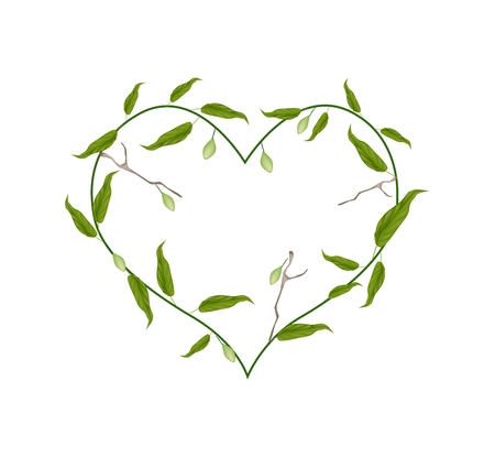 myrobalan: Love Concept, Illustration of Heart Shape with Chebulic Myrobalan with Leaves and Fruits Isolated on White Background.