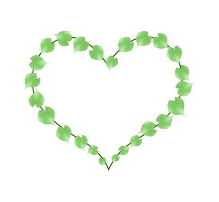 vine leaves: Love Concept, Illustration of A Heart Shape Frame Made of Fresh Green Vine Leaves Isolated on White Background. Illustration