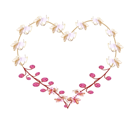 fistula: Love Concept, Illustration of Pink Cassia Fistula, Wishing Tree or Pink Shower Flowers Forming in Heart Shape Isolated on White Background.