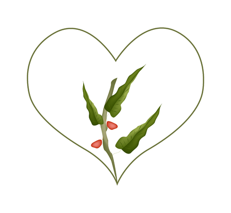 cereal plant: Love Concept, Illustration of Heart Shape with Branch of Pistachio Trees Isolated on White Background.