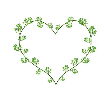 indica: Love Concept, Illustration of Margosa or Neem Blossoms Forming in Heart Shape Isolated on White Background.