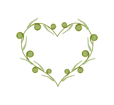 ferns: Love Concept, Illustration of Fresh Green Fiddlehead Ferns Forming in A Beautiful Heart Shape Isolated on White Background.