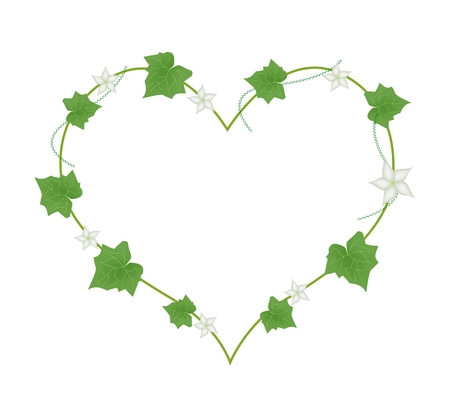 vine leaves: Love Concept, Illustration of Heart Shape Frame Made of Vine Leaves and White Blossoms Isolated on A White Background.