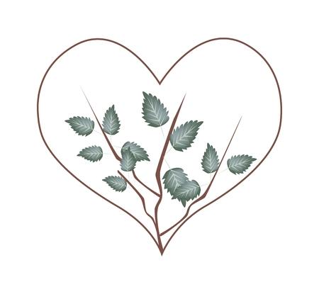 vine leaves: Love Concept, Illustration of Heart Shape Frame Made of Green Vine Leaves Isolated on White Background.