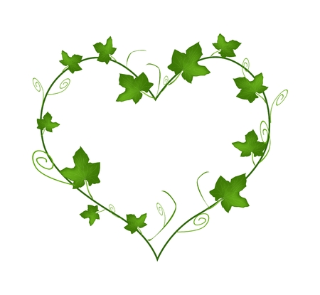 Love Concept, Illustration of Heart Shape Frame Made of Fresh Green Vine Ivy Leaves Isolated on A White Background. Vettoriali
