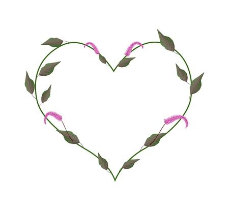 amaranthus: Love Concept, Illustration of Heart Shape Frame Made of Amaranth or Amaranthus Cruentus Plant with Blossoms Isolated on White Background. Illustration
