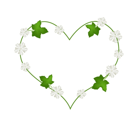 ivy hanging: Love Concept, Illustration of Heart Shape Frame Made of Fresh Green Vine Leaves and White Blossoms Isolated on A White Background.