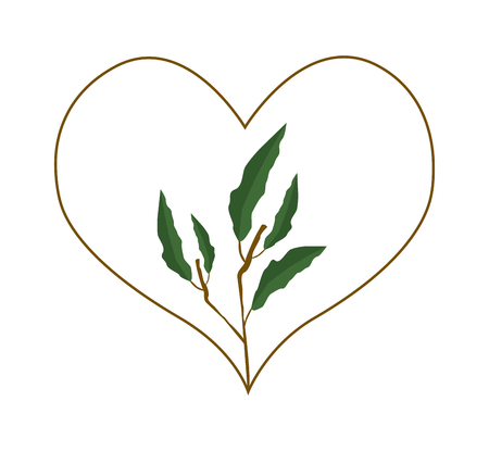 evergreen: Love Concept, Illustration of A Heart Shape Frame Made of Evergreen Leaves Isolated on White Background.