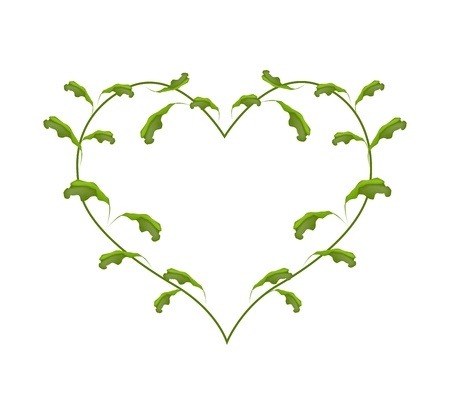 vine leaves: Love Concept, Illustration of Beautiful Heart Shape Frame Made of Green Vine Leaves Isolated on White Background.