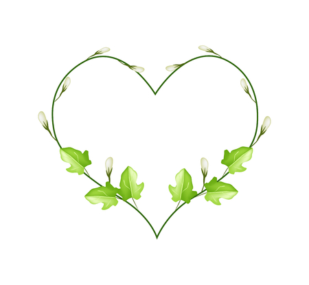 vine leaves: Love Concept, Illustration of Heart Shape Frame Made of Fresh Green Vine Leaves and White Blossoms Isolated on A White Background.