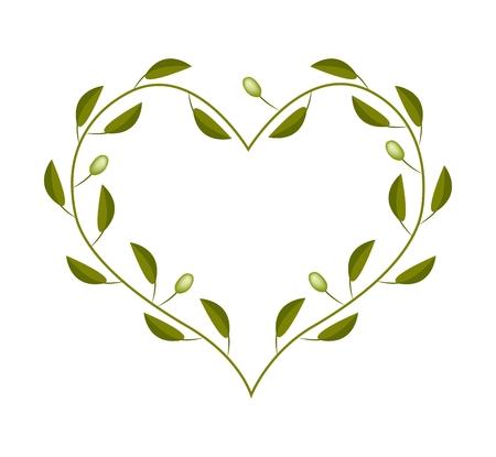 Liefde Concept, Illustratie van groene olijven bladeren en vruchten vormen in hartvorm frame geïsoleerd op een witte achtergrond. Vector Illustratie