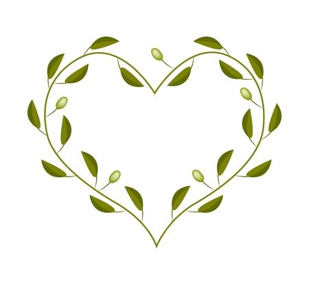 Love Concept, Illustration of Green Olives Leaves and Fruits Forming in Heart Shape Frame Isolated on White Background.