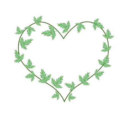 creeping plant: Love Concept, Illustration of Heart Shape Frame Made of  Green Vine Ivy Leaves Isolated on A White Background.