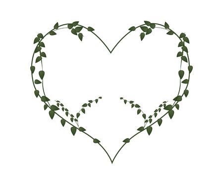 vine leaves: Love Concept, Illustration of A Lovely Heart Shape Frame Made of Green Vine Leaves Isolated on White Background.