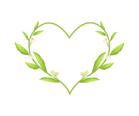 annonaceae: Love Concept, Illustration of Ylang-Ylang Flowers Forming in Heart Shape Wreath Isolated on White Background. Illustration