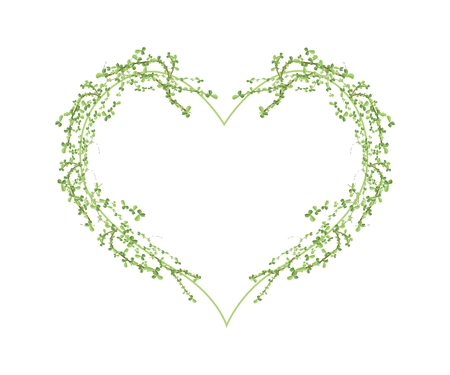 carmona: Love Concept, Illustration of Carmona Retusa (Vahl) or Masam Plants Forming in Heart Shape Isolated on White Background.