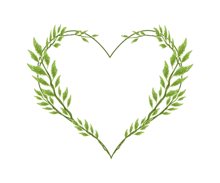 redbird: Love Concept, Illustration of Pedilanthus Tithymaloides or Redbird Cactus Plants Forming in Heart Shape Isolated on White Background.