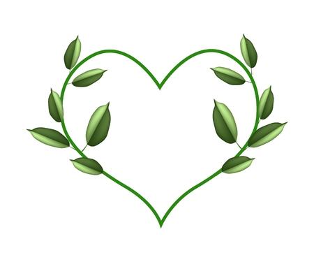vine leaves: Love Concept, Illustration of Heart Shape Frame Made of Fresh Green Vine Leaves Isolated on A White Background. Illustration