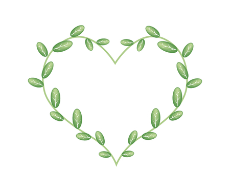 vine leaves: Love Concept, Illustration of A Heart Shape Frame Made of Green Vine Leaves Isolated on White Background.