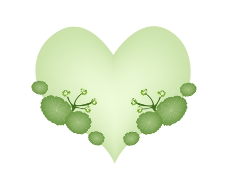 asiatic: Love Concept, Illustration of Asiatic Pennywort or Hydrocotyle Umbellata Plants Forming in Heart Shape Isolated on White Background. Illustration