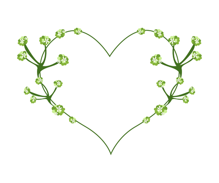 asiatic: Love Concept, Illustration of Asiatic Pennywort or Hydrocotyle Umbellata Blossoms Forming in Heart Shape Isolated on White Background.