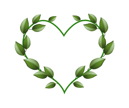 green floral: Love Concept, Illustration of Heart Shape Made of Green Vine Leaves Isolated on White Background.
