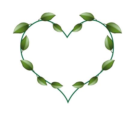 vine leaves: Love Concept, Illustration of Heart Shape Frame Made of Lovely Green Vine Leaves Isolated on White Background.