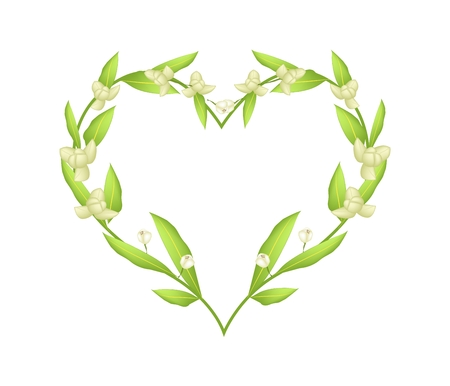 annonaceae: Love Concept, Illustration of Ylang-Ylang Flowers Forming in A Heart Shape Frame Isolated on White Background.