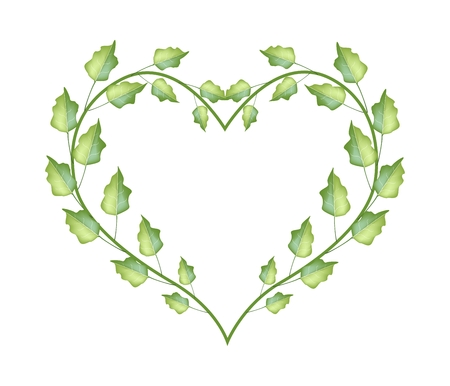 organic background: Love Concept, Illustration of Fresh Green Leaves Forming in Beautiful Heart Shape Isolated on White Background. Illustration