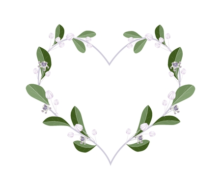 milkweed: Love Concept, Illustration of Calotropis Gigantea Flowers or Crown Flowers Forming in Heart Shape Isolated on White Background.