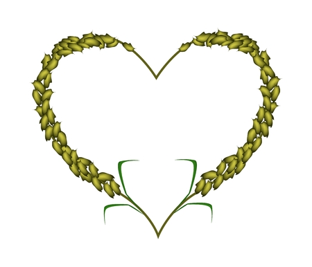 millet: Love Concept, Illustration of Ripe Green Millets Forming in Heart Shape Isolated on White Background.
