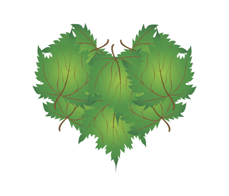 japanese maple: Love Concept, Illustration of Green Maple Leaves Forming in Heart Shape Isolated on White Background.