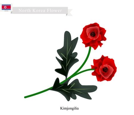 tuberous: North Korea Flower, Illustration of Kimjongilia or Red Tuberous Begonia Flower. One of The Most Popular Flower of North Korea. Illustration