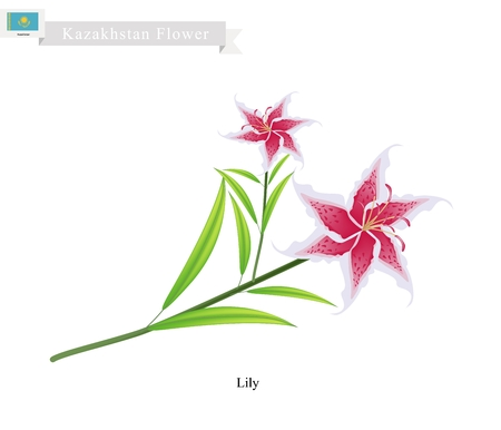 lilium: Kazakhstan Flower, Illustration of Lily Flowers or Lilium. One of The Most Popular Flower in Kazakhstan.