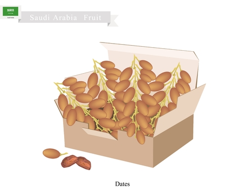 dates fruit: Saudi Arabia Fruit, Illustration of Dried Dates. The Most Popular Fruits of Arabian Peninsula.