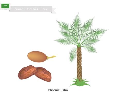 Saudi Arabia Tree, Illustration of Phoenix Palm. The National Tree of Saudi Arabia.